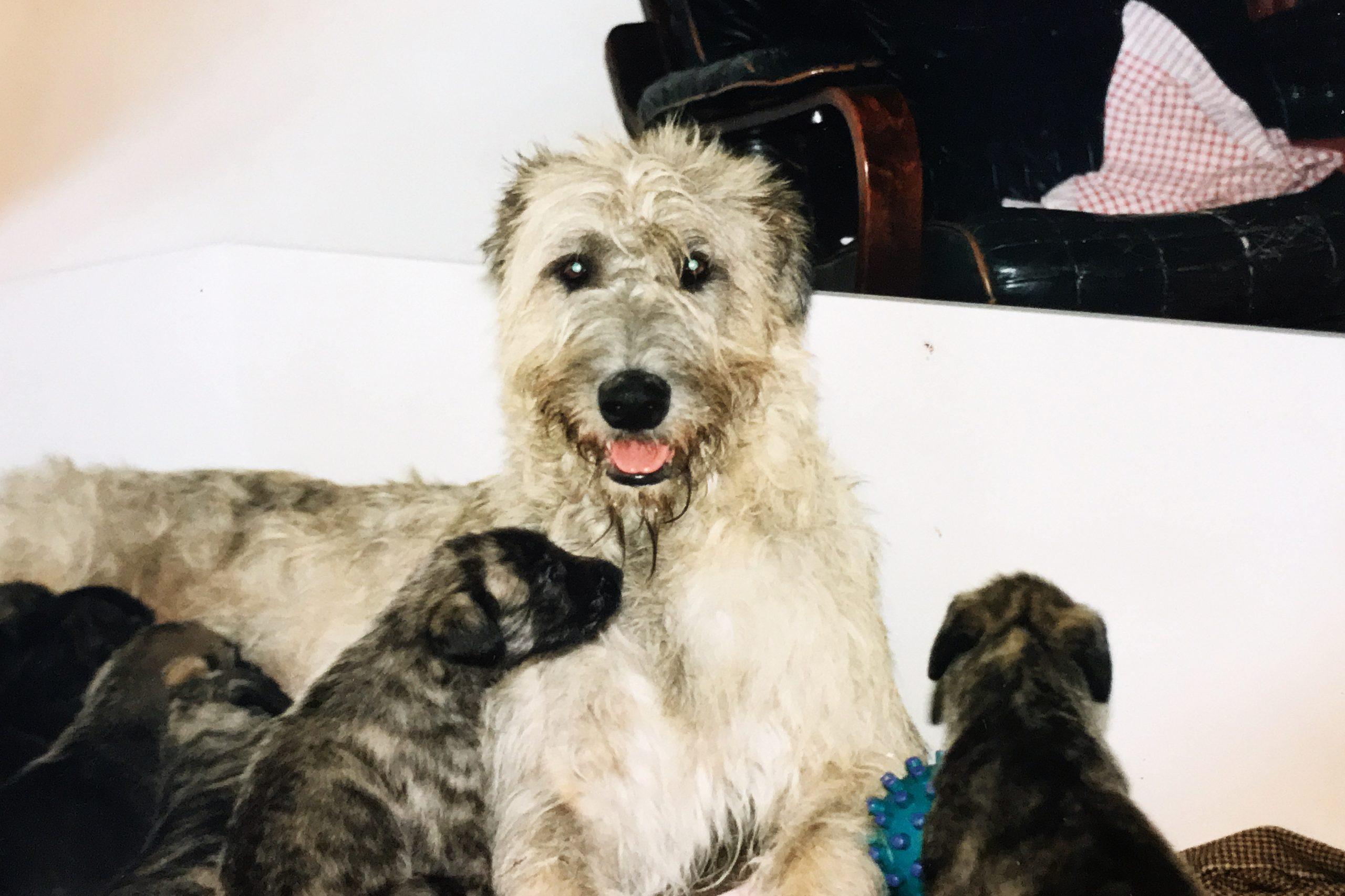 First 5 pups from Raisa!