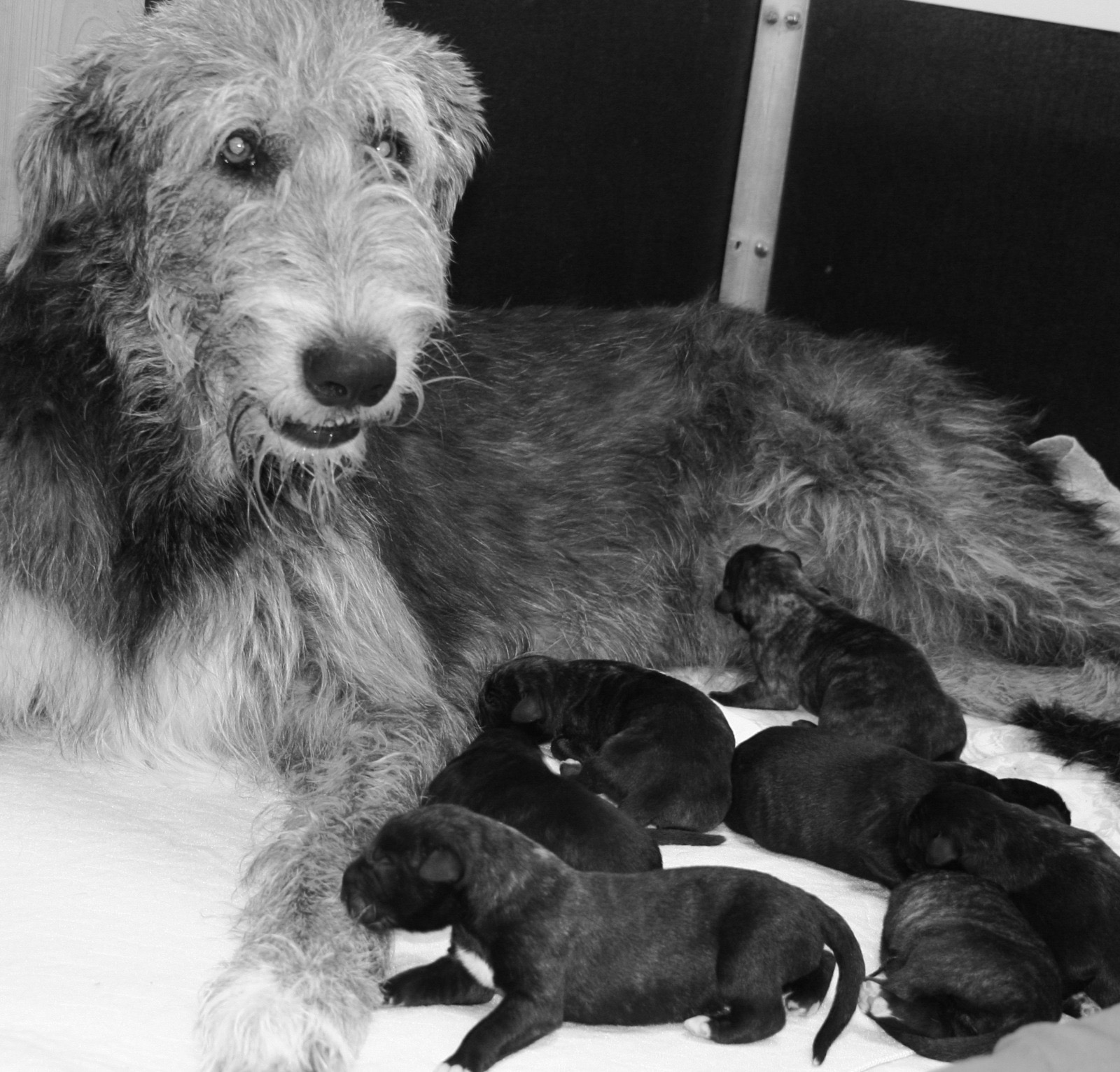 Another litter of 7!