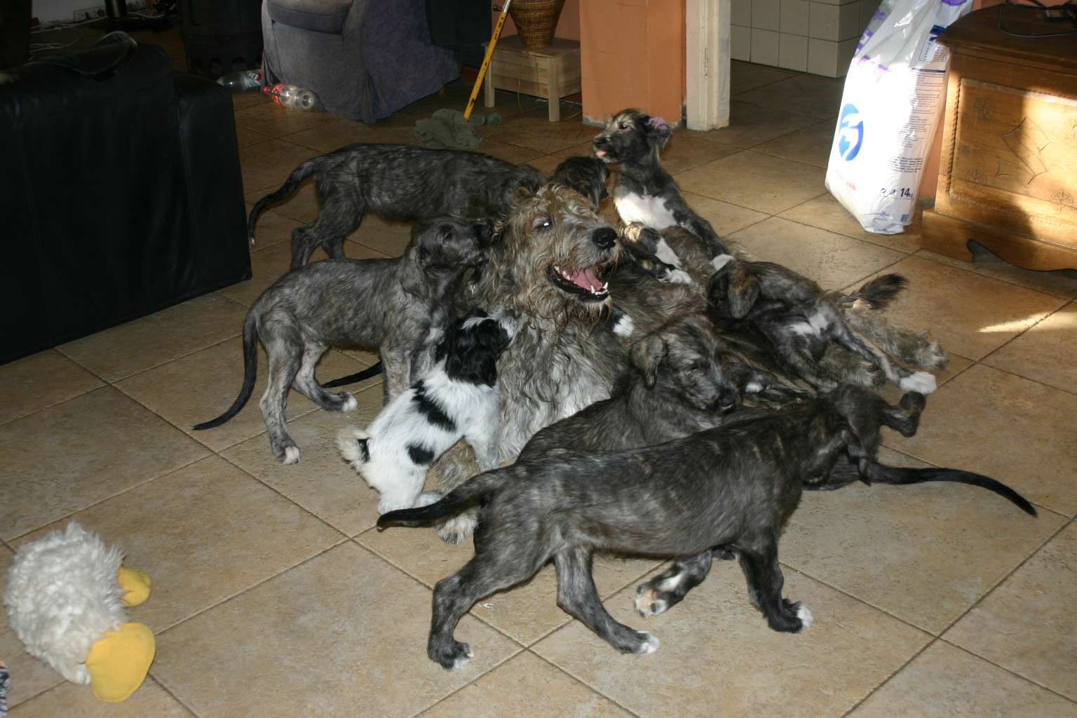 9 new puppies born!