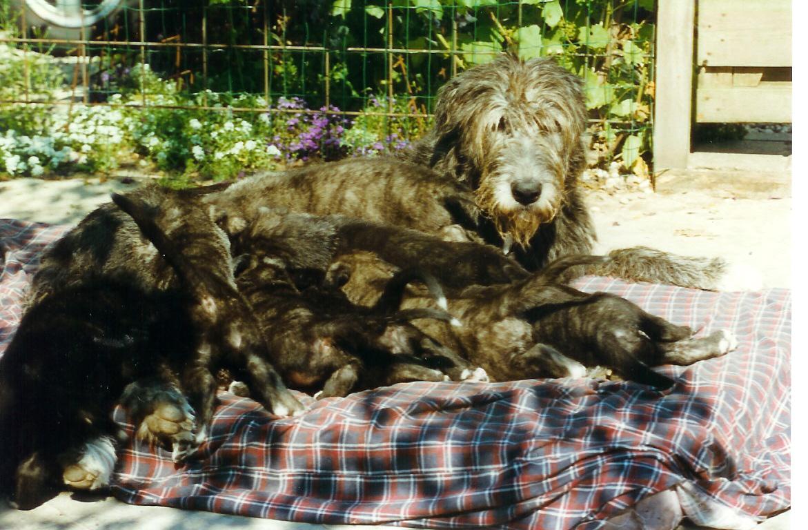 Shanna got 9 puppies!