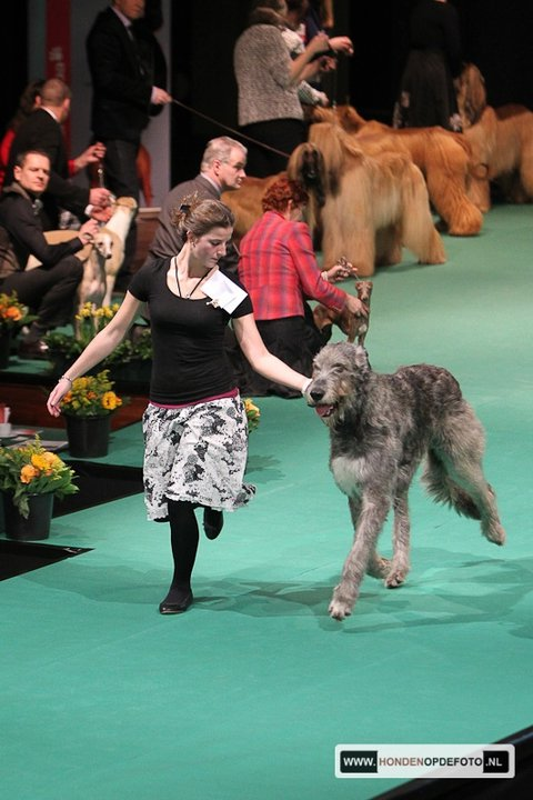 Grand Wazoo at Dog of the Year Show!