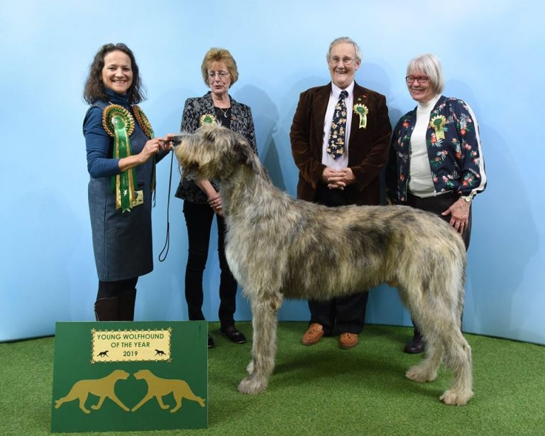 Wolfhound of the Year 2019