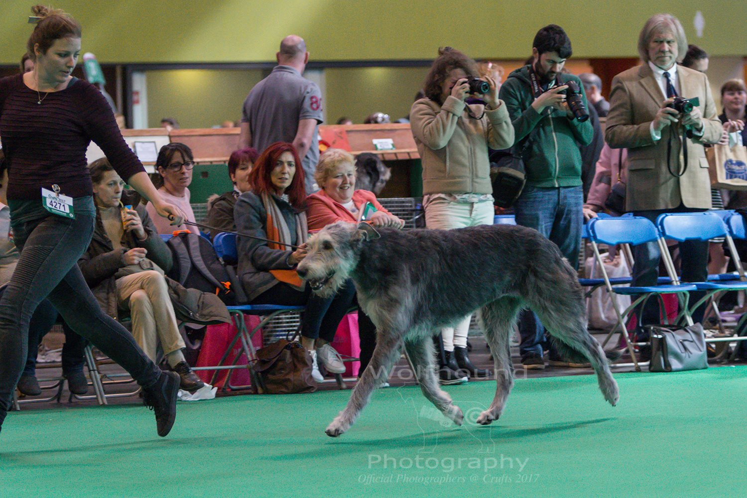 Jones and Seven at Crufts!