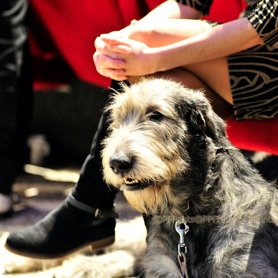 Hond van het Jaar Show 2019